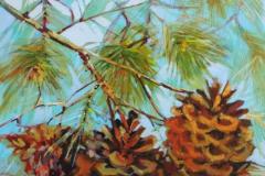 Ponderosa Pine Cones 16 X 20